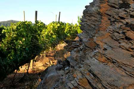 Tecnovino vino chileno Escaleras de Empedrado Torres 2