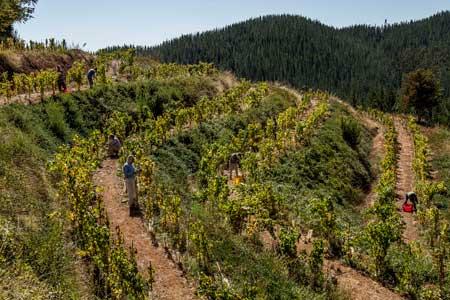 Tecnovino vino chileno Escaleras de Empedrado Torres 3