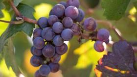 Las Comunidades que más aumentan su facturación por exportaciones de vino