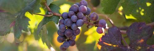 Tecnovino exportaciones de vino Comunidades