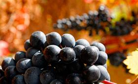 Tecnovino Enoturismo congreso Great Wine Capitals 280x170