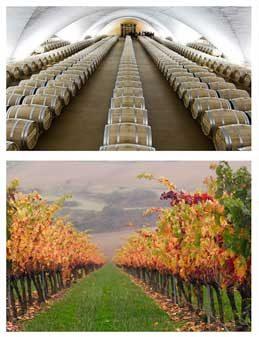 Tecnovino Otazu garnacha vinos alta gama