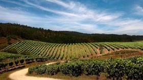 Acevin renueva la certificación de 17 Rutas del Vino