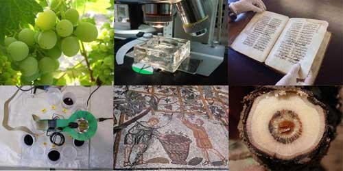Tecnovino investigaciones sobre la vid y el vino CSIC