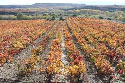 Tecnovino plaguicidas en los vinedos Rioja