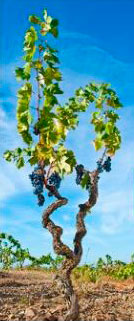 Tecnovino certificacion para bodegas Wineries for Climate Protection 3