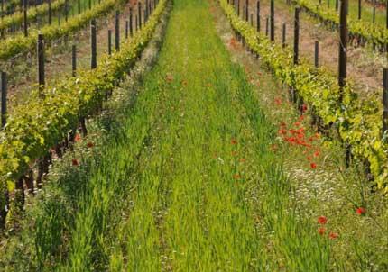 Tecnovino simposio viticultura y enologia ecologica Incavi
