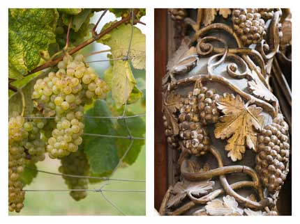 Tecnovino diversidad vitivinicola Espana CSIC