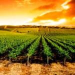 Ferias y eventos vitivinícolas en los meses de julio y agosto de 2018