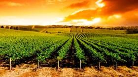 La superficie de viñedo en España crece un 0,4% en 2015