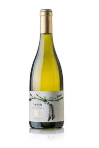 Tecnovino vino variedad antigua Israel