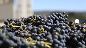 Hacia la valorización de los desechos vinícolas