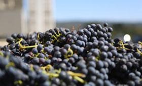 Tecnovino Ainia sostenibilidad valorizacion desechos vinicolas uva 280x170