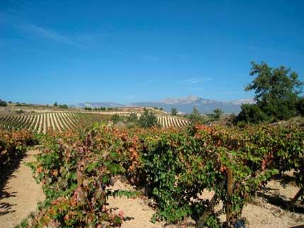 Tecnovino Artadi abandono DOca Rioja 1