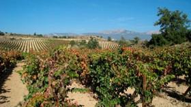 Artadi anuncia su salida de la D.O. Calificada Rioja