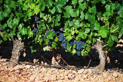 Tecnovino Ruta del Vino Ribera del Duero crecimiento 2