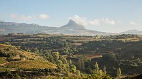Una jornada sobre cómo cuidar los viñedos para que vivan cien años