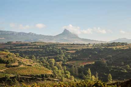 Tecnovino jornada retos de la viticultura Julian Palacios