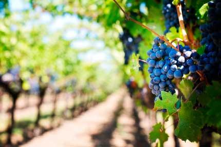 Tecnovino ozono vino Asp Asepsia 2