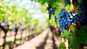 El uso del ozono en la industria del vino, una cuestión de rentabilidad