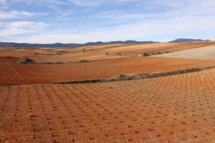 Tecnovino vinedo en Espana plantacion UPA