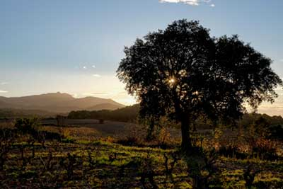 Tecnovino 7 Magnifics Somiadors paisaje