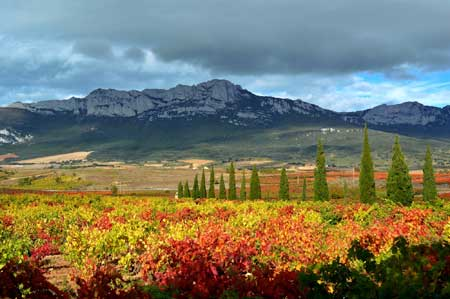 Tecnovino variedades de vid La Rioja Alta 1