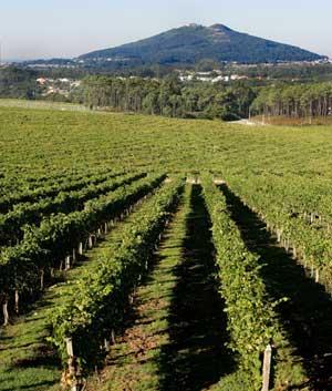 Tecnovino variedades de vid La Rioja Alta 2