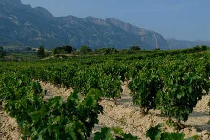 Tecnovino variedades de vid La Rioja Alta 3