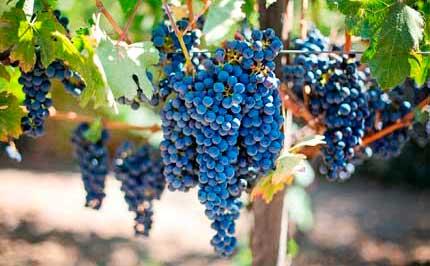 Tecnovino versatilidad ozono vino Asp Asepsia 2