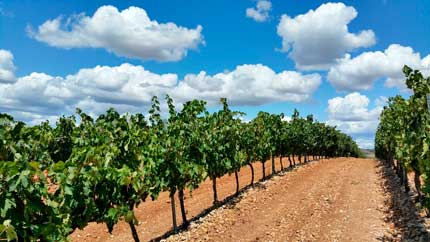 Tecnovino versatilidad ozono vino Asp Asepsia 3