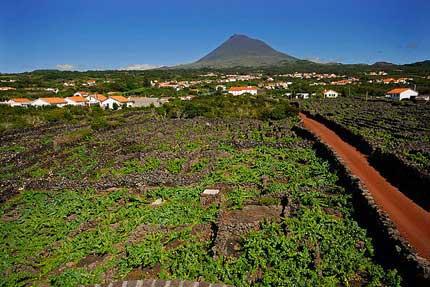 Tecnovino Concurso Internacional de Vinos del Atlantico Azores 1