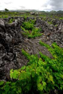 Tecnovino Concurso Internacional de Vinos del Atlantico Azores 2