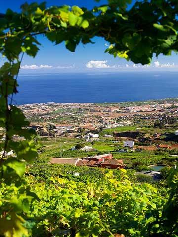 Tecnovino Premio Alimentos de Espana al Mejor Vino 2016 El Penitente