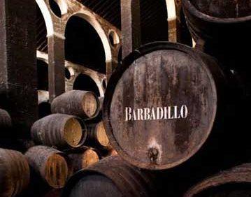 Tecnovino innovacion en el marketing y la enologia Barbadillo Uned