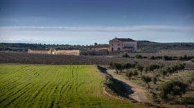 Bodegas Torres construirá una bodega en Lleida para elaborar su vino Purgatori