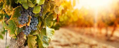 Tecnovino maceracion de los vinos tintos Agrovin Universidad Murcia