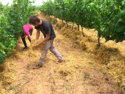 Tecnovino suelos de vinedo acolchado de paja