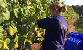 Tecnovino Terras Gauda viticultura sostenible 280x170