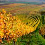 15.127 euros por hectárea, el precio medio del viñedo en España en 2015
