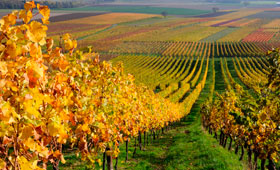 Tecnovino precio medio del vinedo Espana 280