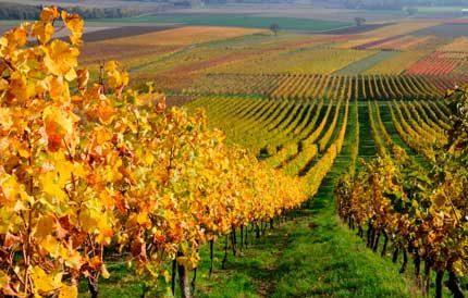 Tecnovino precio medio del vinedo Espana