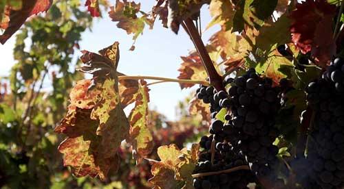 Tecnovino Bodegas Montecillo vino de Rioja 2