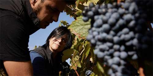 Tecnovino Bodegas Montecillo vino de Rioja 3