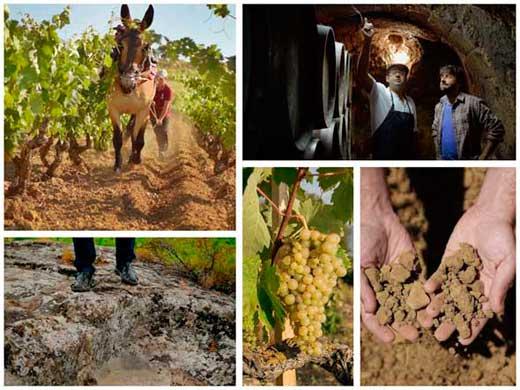 Tecnovino Rioja Alavesa jornada Abra 4