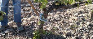 Tecnovino novedades tecnicas para viticultura y bodegas Enomaq Dabayma desbrotador