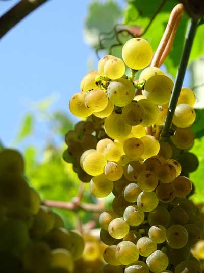 Tecnovino vino experimental Mausino Vina Moraima ratino