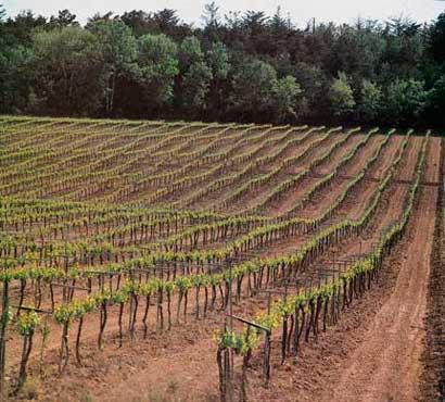 Tecnovino nuevas plantaciones de vinedo
