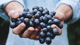 ¿Qué proyectos está desarrollando el sector vitivinícola?
