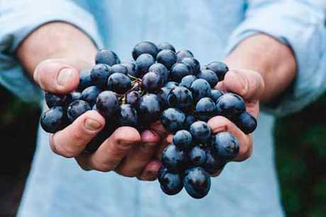 Tecnovino sector vitivinicola Idiogram 3